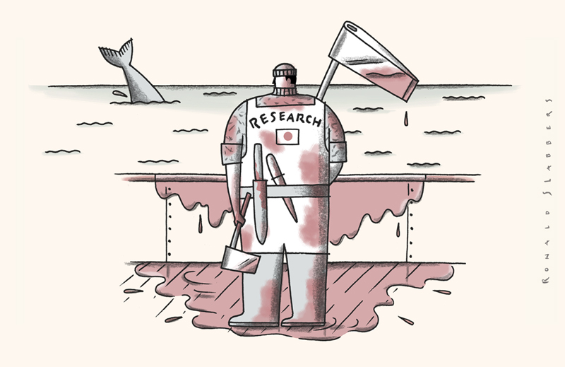 cartoon on Japanese whale killing, japanese whale research, japanese whale slaughter, Japanese whale consumption, Japan steps out of the International Whaling Commission